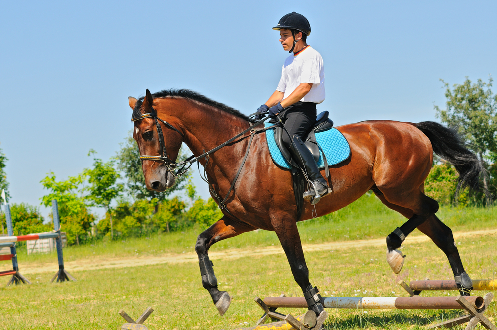 Yes, trot poles are good for your horse
