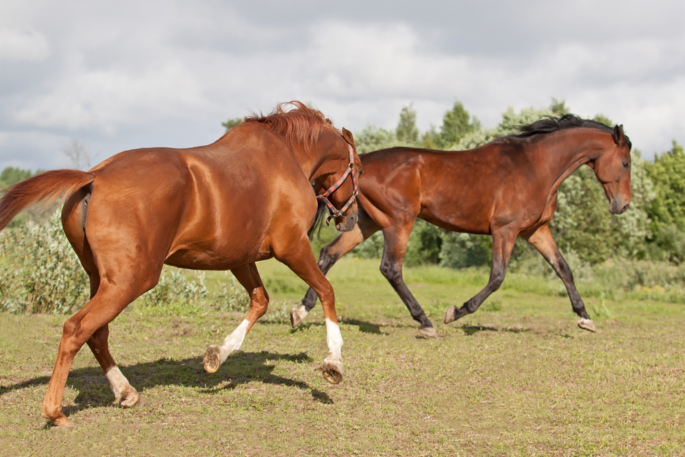 Body Condition Score correlates with dominance in pasture kept horses
