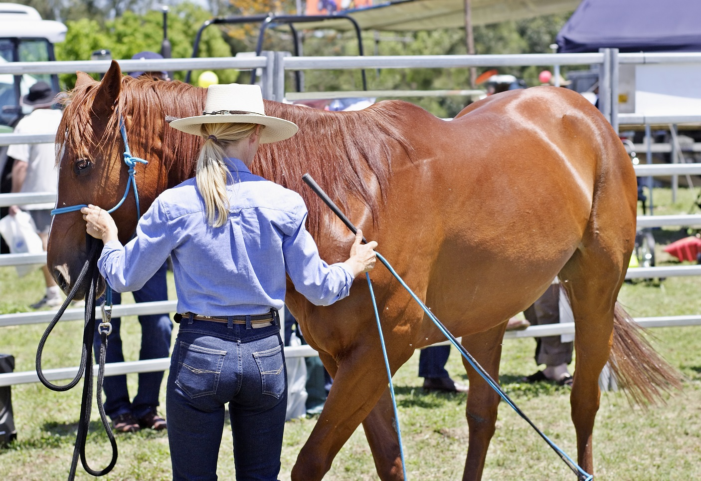 How to quantify negative reinforcement training