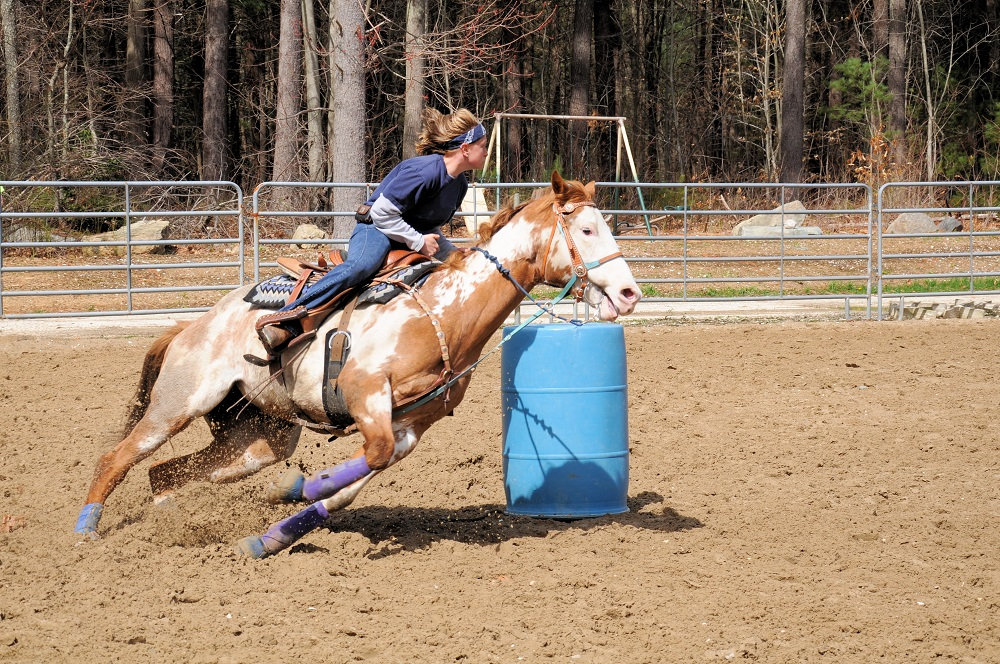 Competition more stressful for inexperienced horses