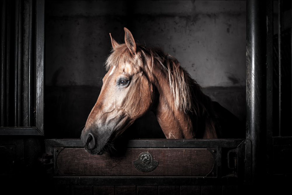 Keeping stabled horses occupied at night