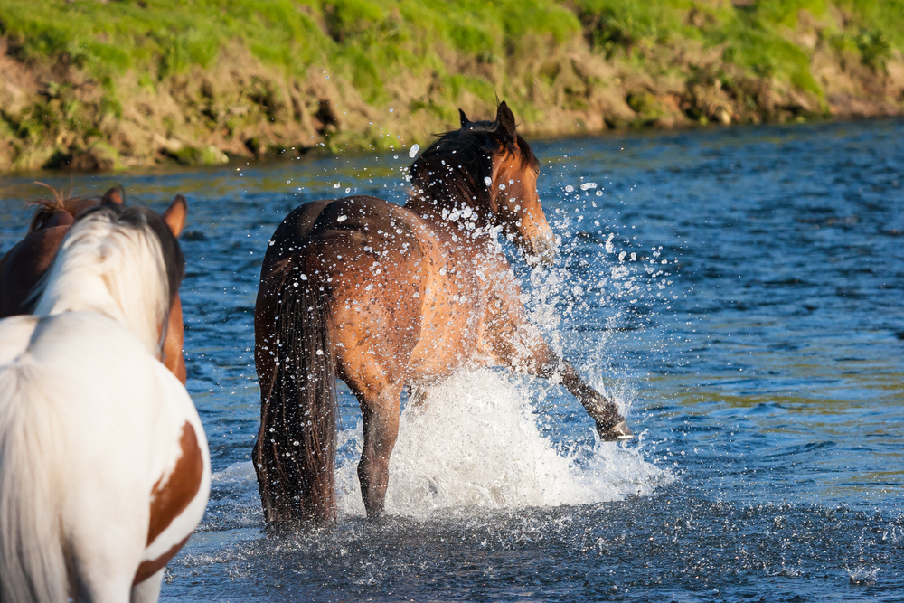 Do horses demonstrate social learning in scary situations?