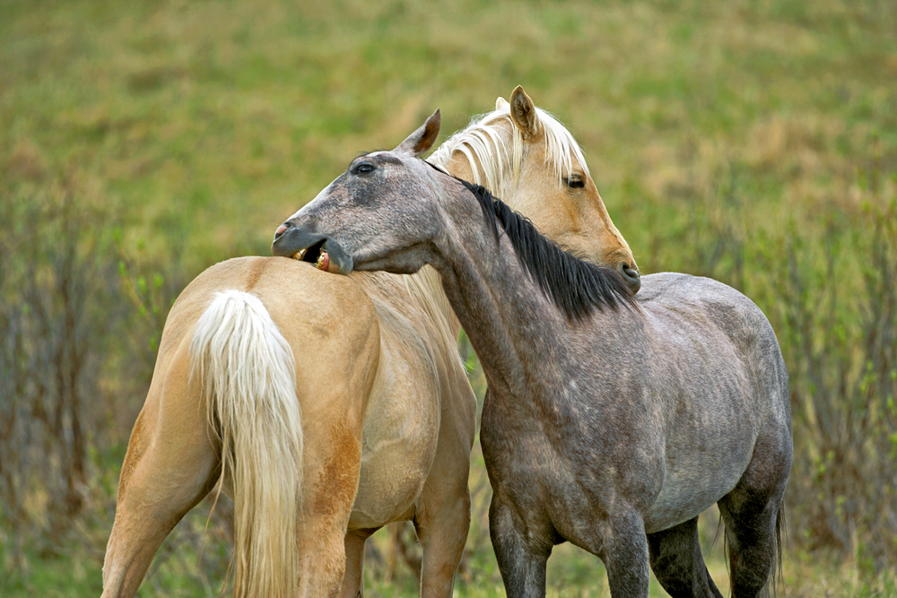 What is the likelihood of injury in horses kept in groups?