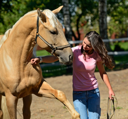 How to train a horse – 15 steps according to science